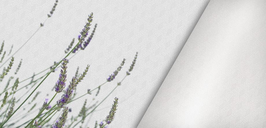 banner_aromatherapy-01